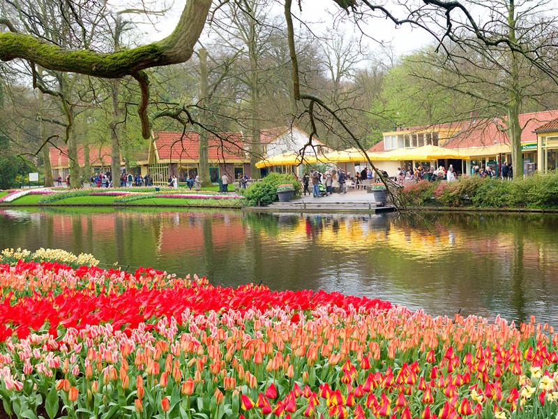 Tulips & Windmills in Holland and Belgium