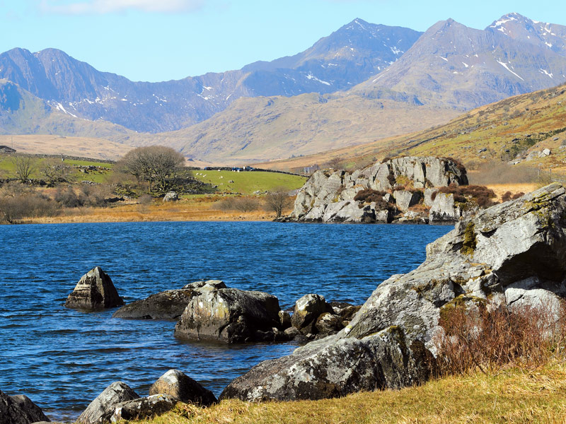 Snowdonia national park wildlife