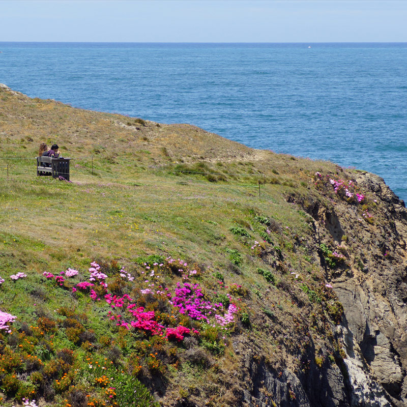 22 most romantic places in the world to propose - Mendocino coast botanical gardens ...