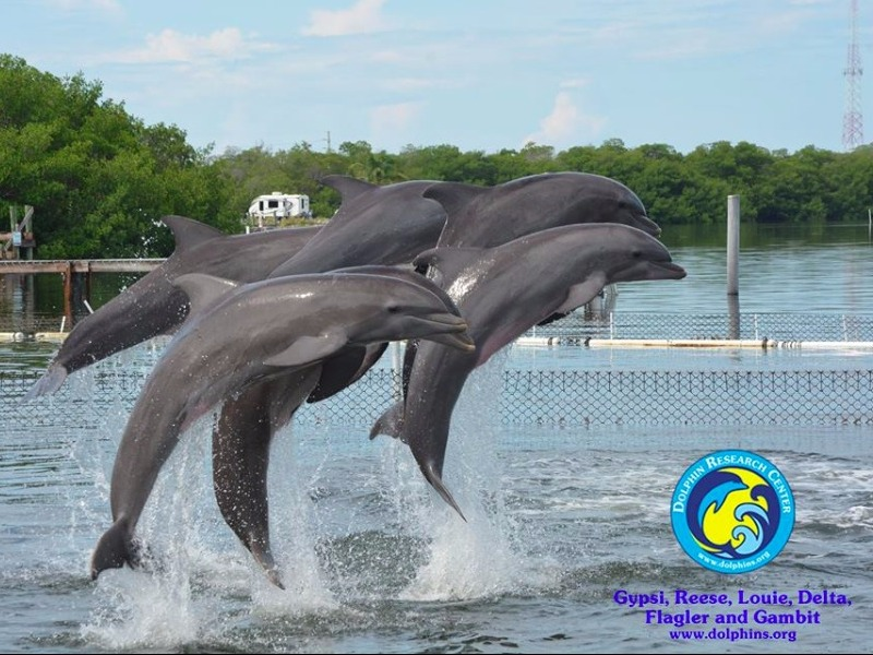 Dolphin Watch Eco Tour Trips