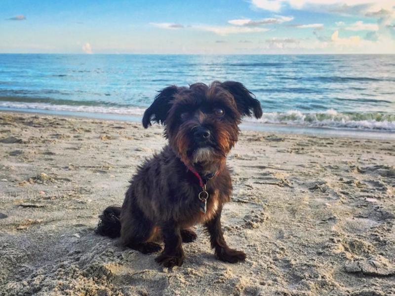 Dog Friendly Beaches South Florida