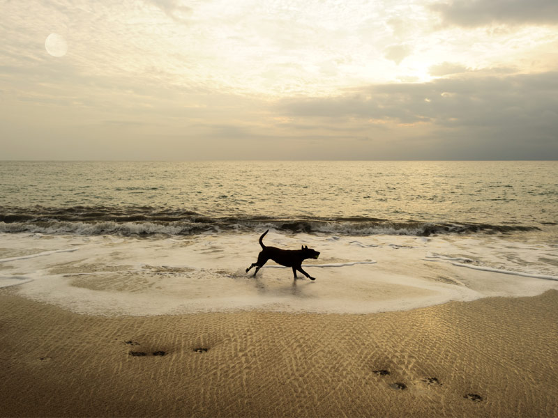 11 Of The Best Pet Friendly Beaches In Florida