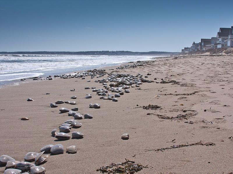 Best Maine Beaches For Seashells