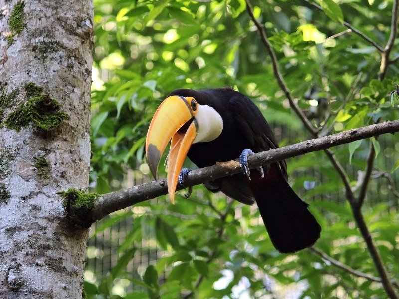 toucan in the Argentine jungle