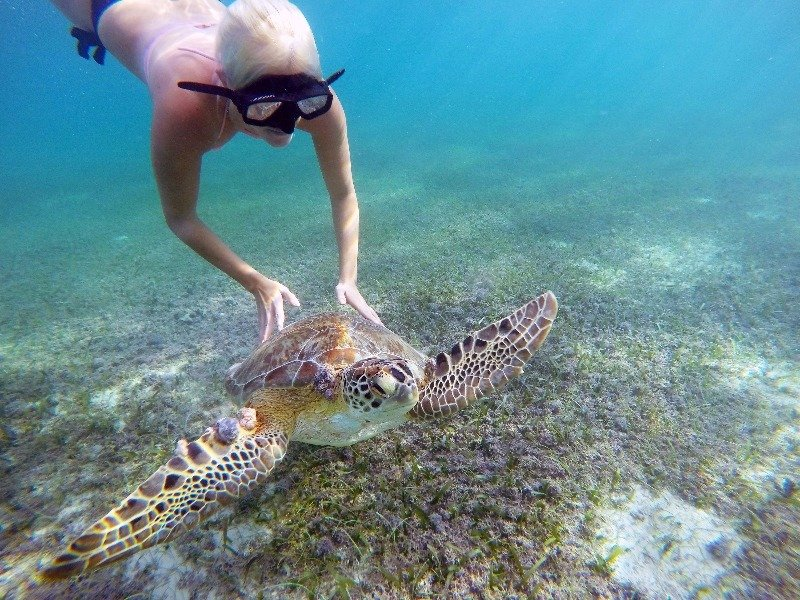 snorkeling with sea turtles, Yucatan, Mexico