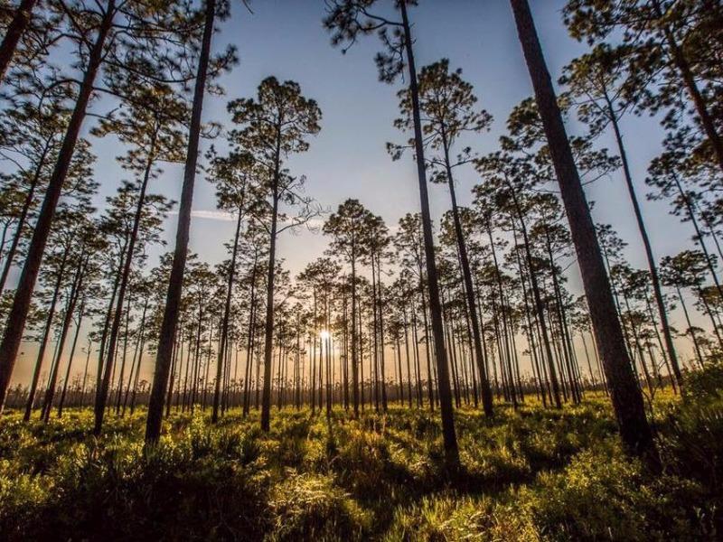 Okefenokee Swamp Park 9 Best Memorial Day We...