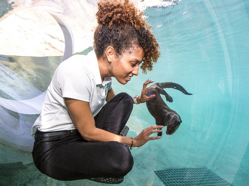 Experience Florida Mission Everglades At Zoo Miami