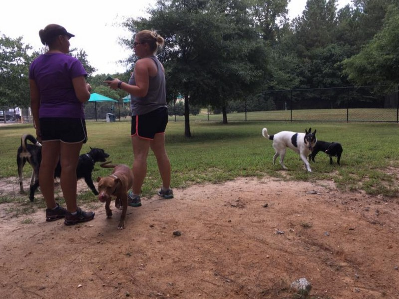 9 Best Dog Parks In Georgia To Play With Your Pup