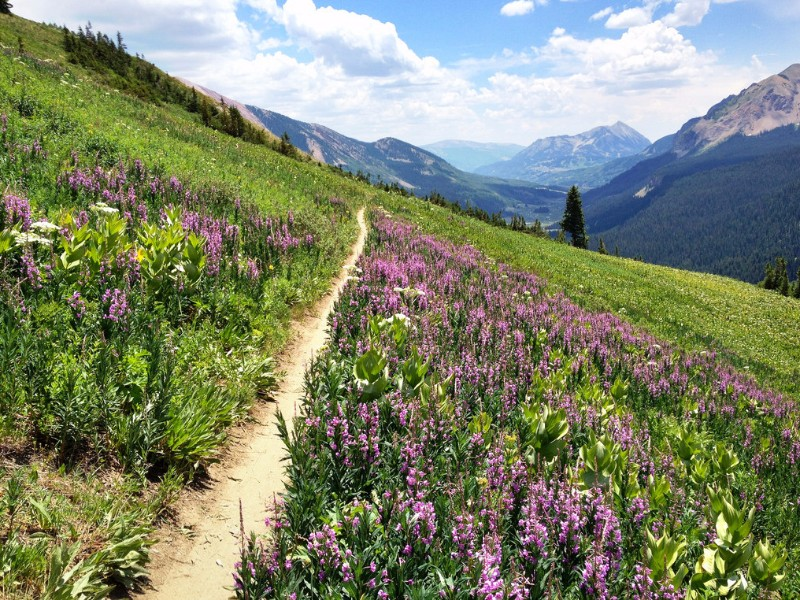 Crested Butte Is The Wildflower Capital Of Colorado