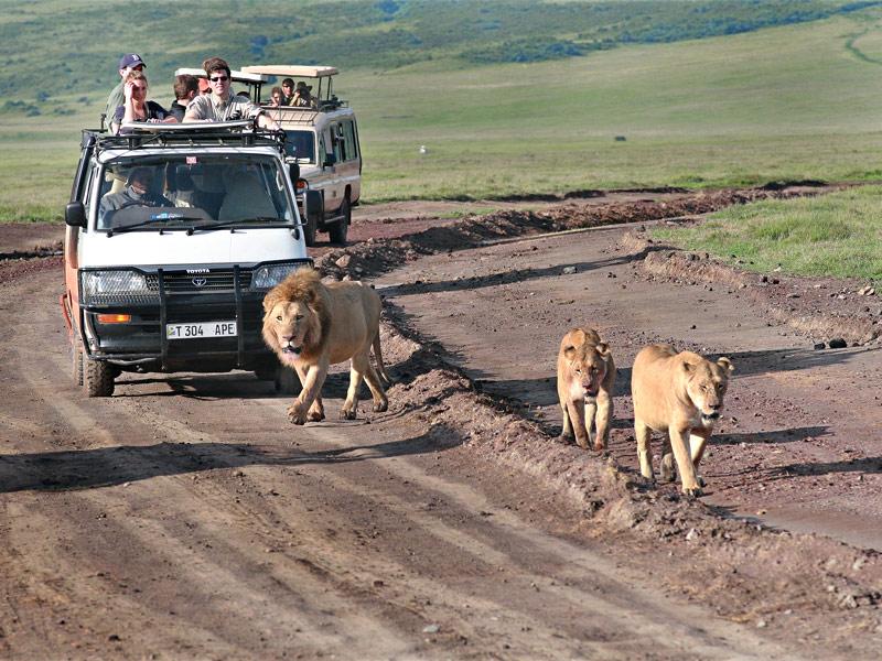 Safari in the Serengeti