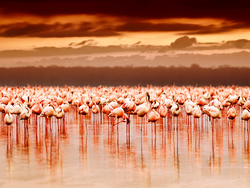 15 Of Africa S Most Incredible Destinations For Animal