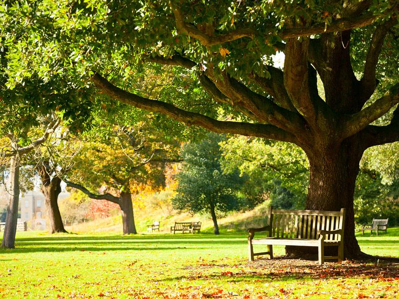 Royal Botanic Gardens at Kew