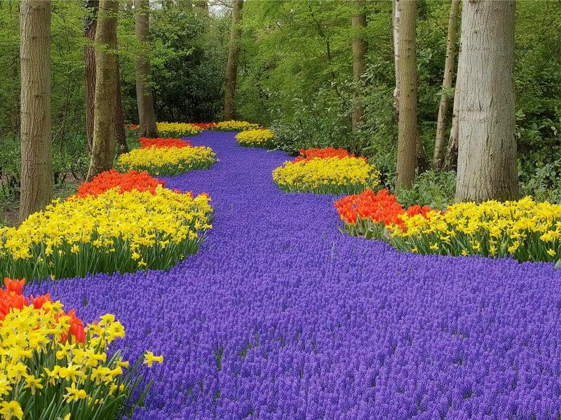 Spring Gardens Keukenhof