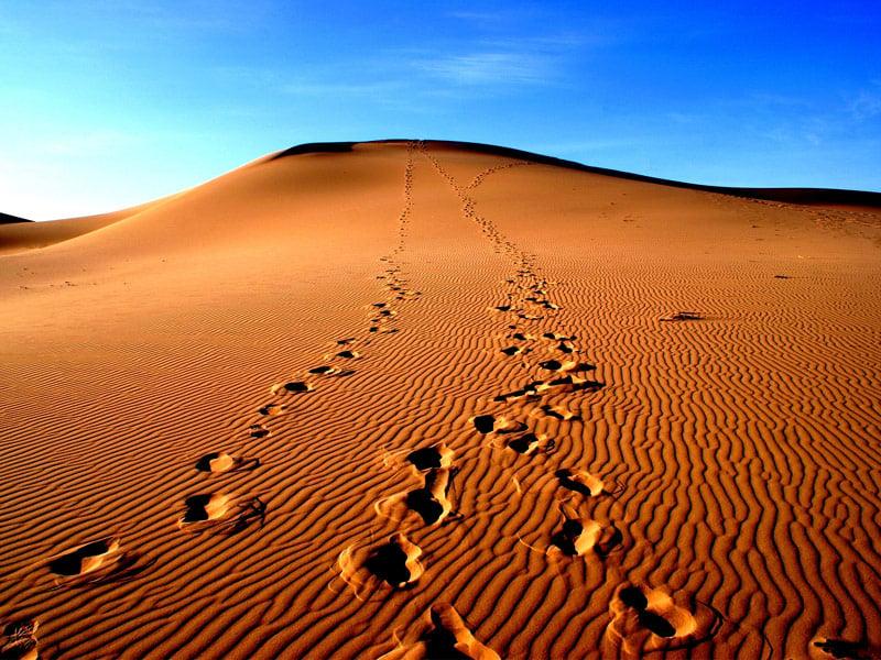 The Gobi Desert