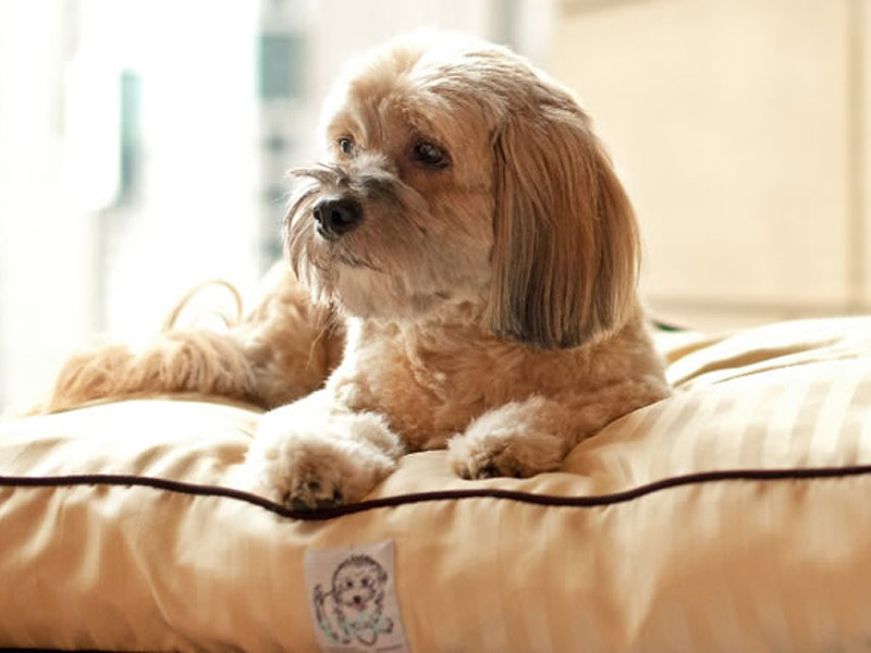 Top 18 Pet Friendly Resorts In The U S Tripstodiscover