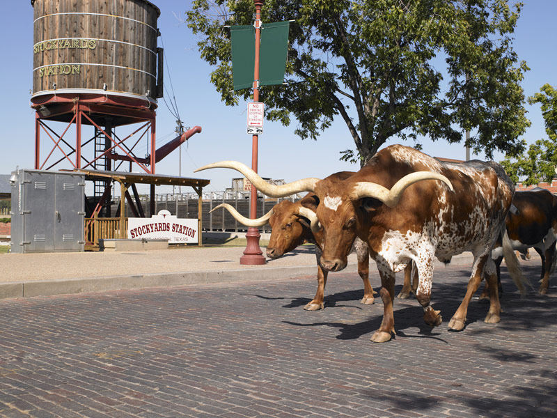 Learn about texas dinosaurs museums