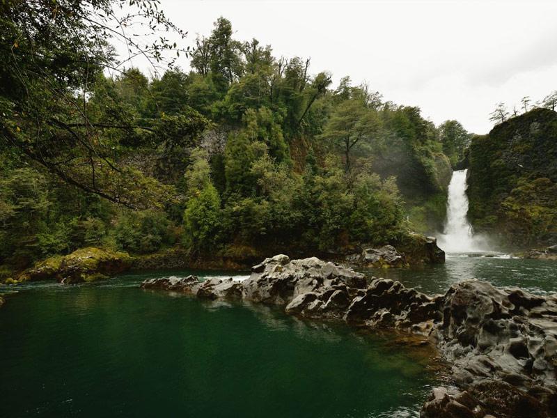 Patagonia Rain Forest