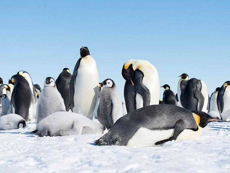 Scott Island, Antarctica