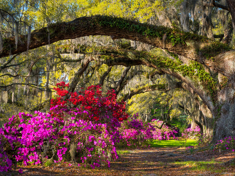 20 best memorial day weekend getaways 2018 for How do i get to charleston south carolina