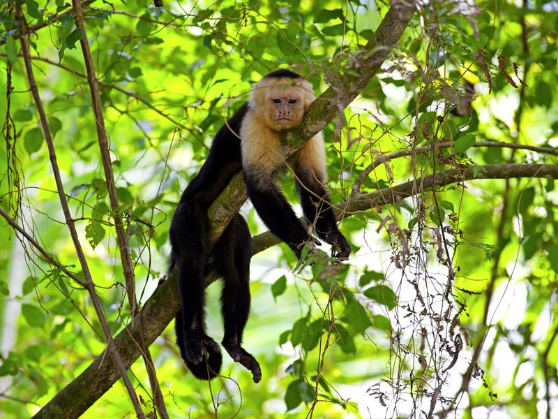 Công viên quốc gia Manuel Antonio, Costa Rica