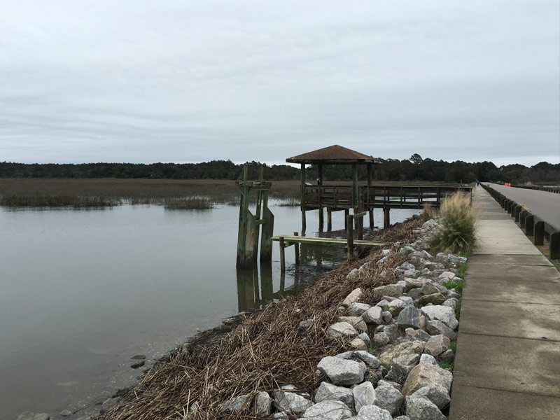 Alligator Spotting at Huntington Beach State Park