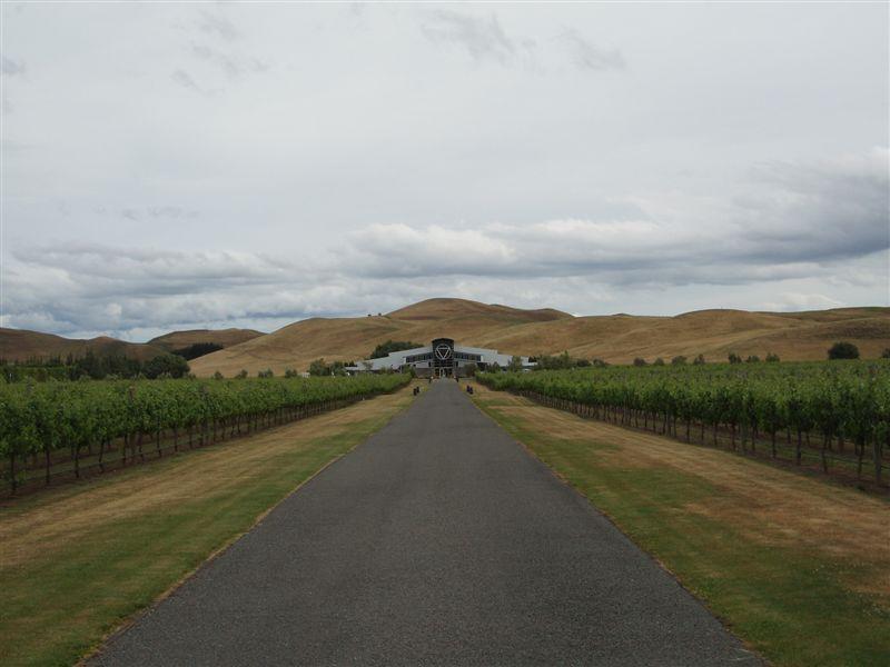 Vineyard, Hawke's Bay