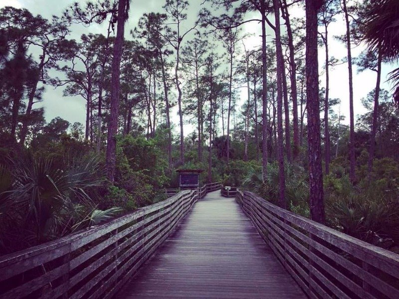 Corkscrew Swamp Sanctuary, Naples