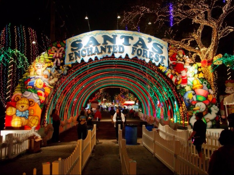 Enchanted Forest Christmas Lights