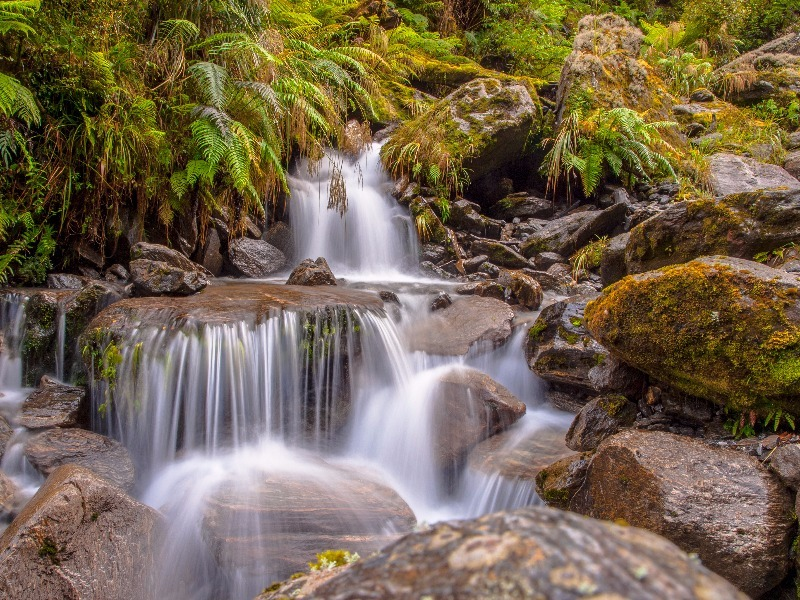 10 of the World's Most Beautiful Rainforests - TripsToDiscover