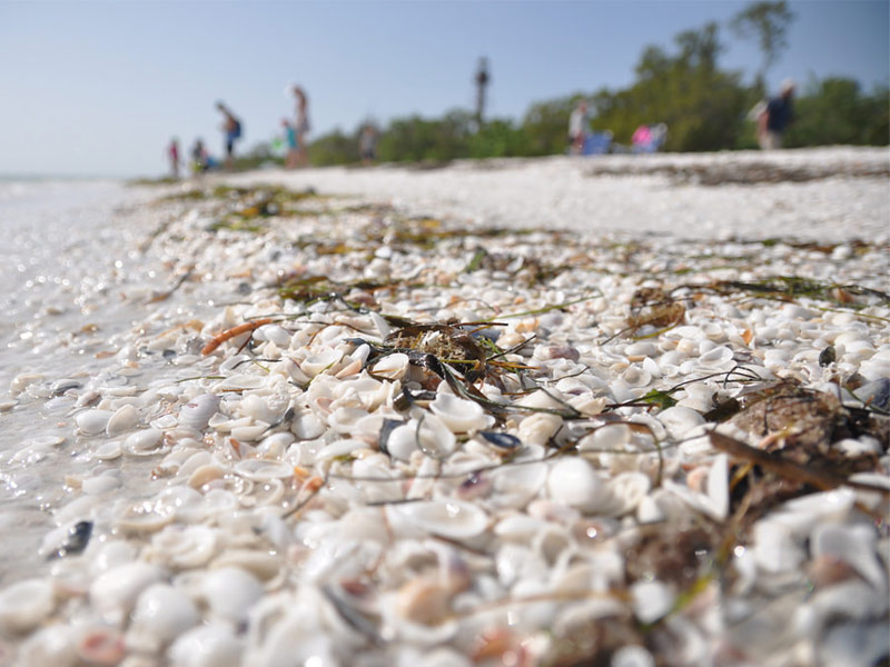 Best East Coast Florida Beaches For Shells