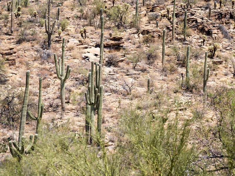 10 of the Best Hiking Trails in Arizona