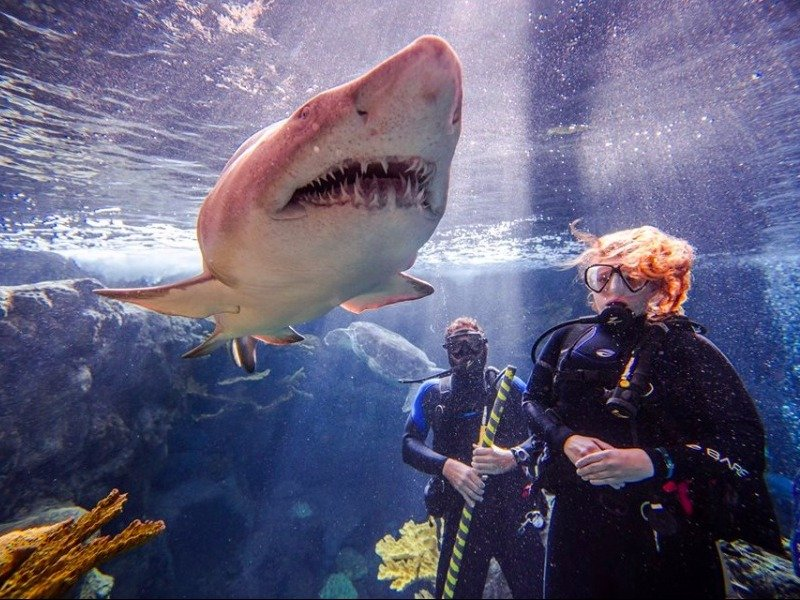 Hotels In Tampa >> Top 10 Best Aquariums in Florida - TripsToDiscover
