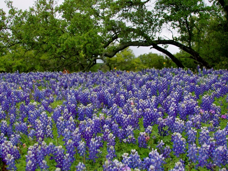 10 Most Beautiful Cities In Texas In With Photos