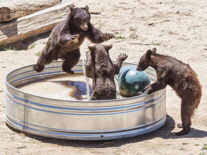 The Wild Animal Sanctuary Near Denver Colorado