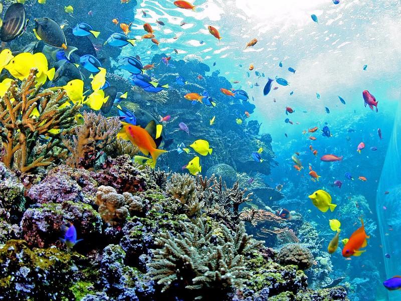 The Georgia Aquarium In Atlanta Know