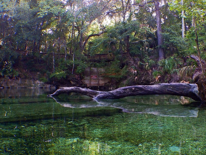 See Manatees And More In Blue Springs State Park Florida