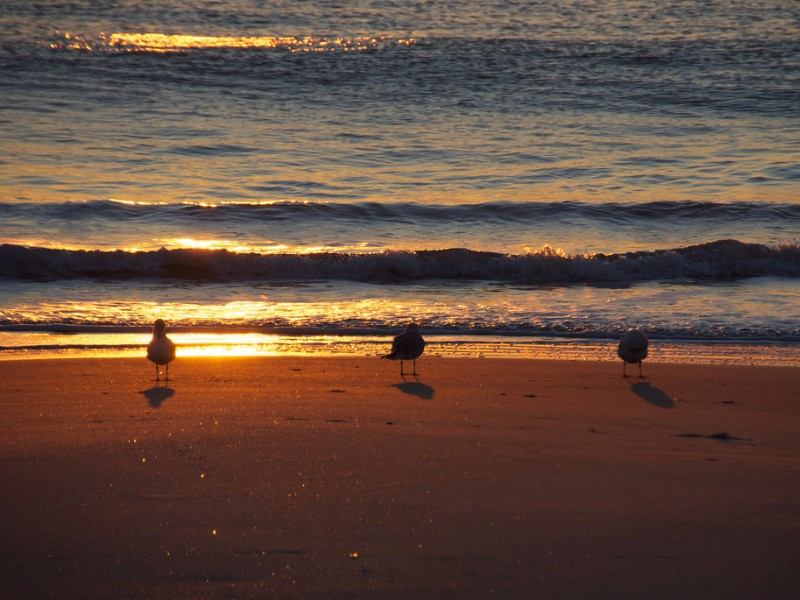 9 Best Places For Beach Camping In Nc Right On The Water