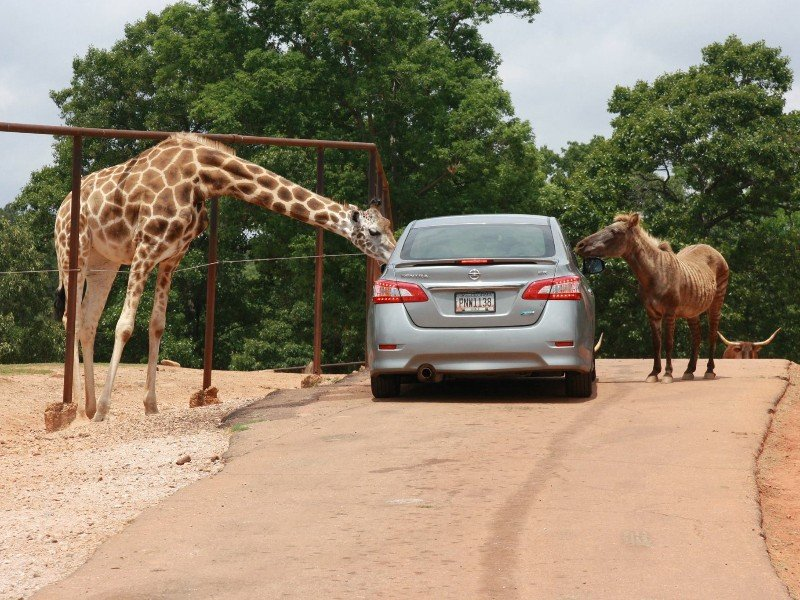 Take A Drive On The Wild Side At Wild Animal Safari In Georgia Tripstodiscover