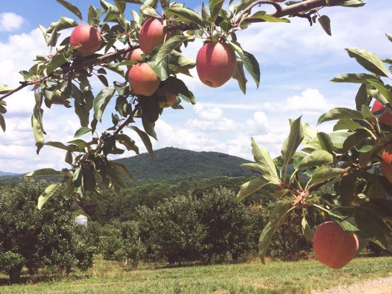 8 Best Places for Picking Apples This Fall in Georgia ...