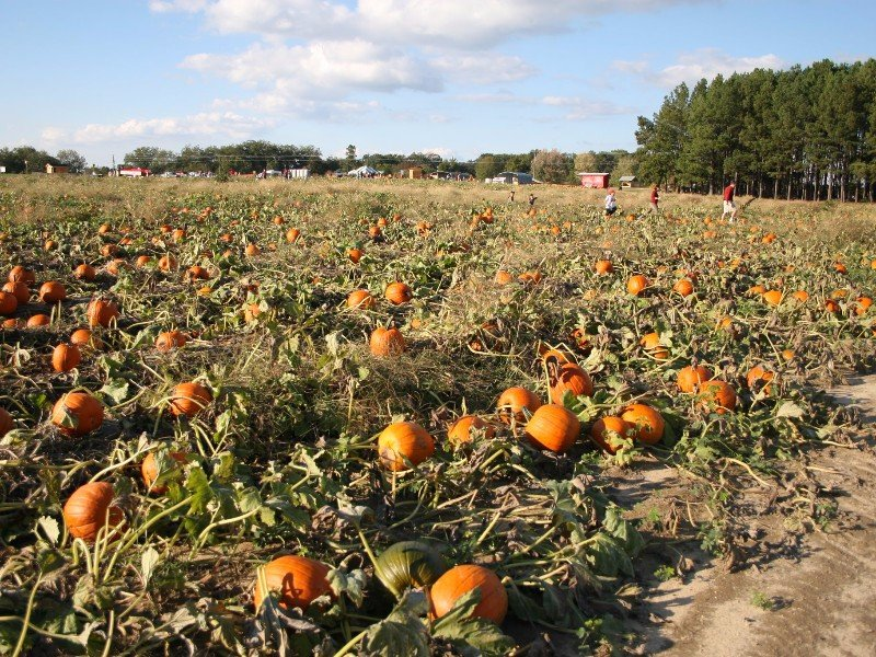 10 Pumpkin Patches to Visit in Georgia