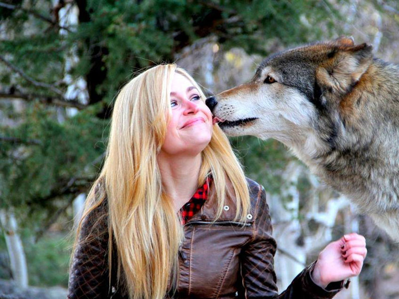 Colorado Wolf And Wildlife Center Come Face To Face With