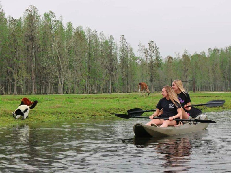 You Can Go On A Kayak Safari In Lakeland Florida