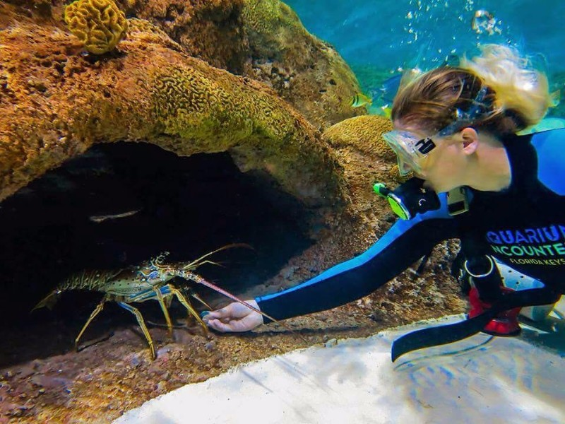 Top 10 Aquariums In Florida