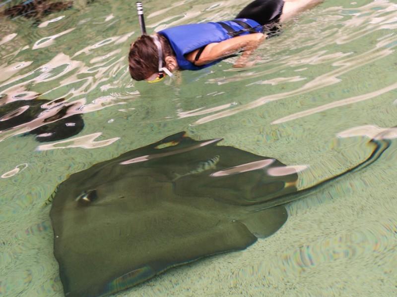 Top 10 Best Aquariums in Florida (with Photos ...