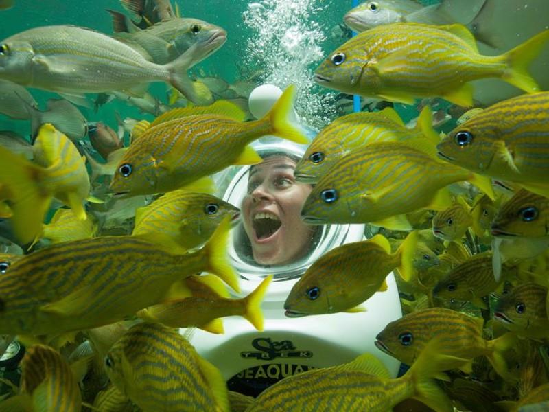 Top 10 Best Aquariums in Florida - TripsToDiscover