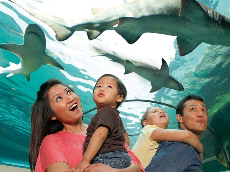 Top 10 Best Aquariums in Florida (with Photos) - TripsToDiscover