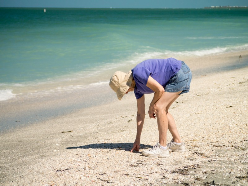 13 Best Beaches for Shelling in Florida (Travel Guide & Map