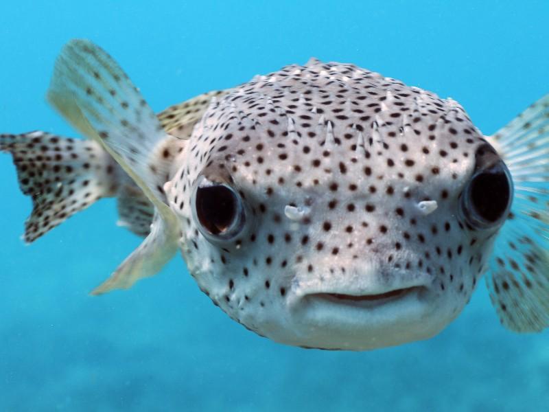 plenty of fish big island hawaii
