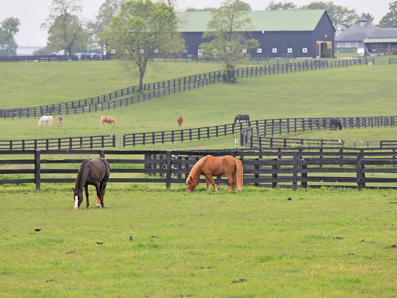 9 Best Things To Do In Lexington Kentucky Tripstodiscover