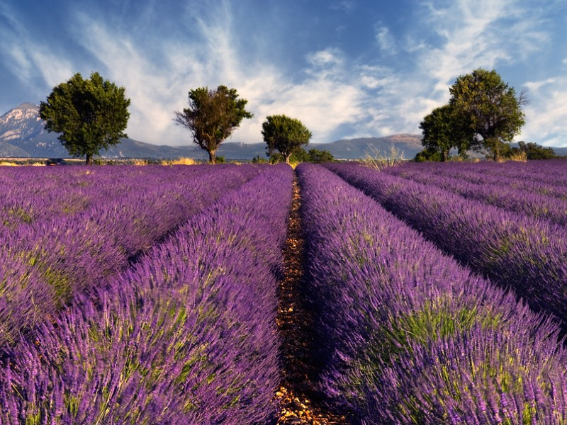 Lavender Fields France Map.11 Best Places To Visit In The South Of France For 2019 With Photos